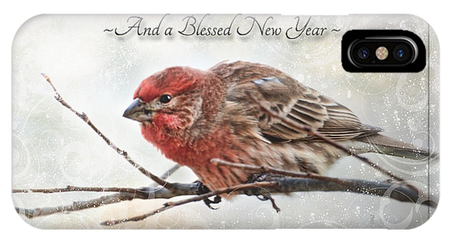 Animals IPhone X Case featuring the photograph Crouching Finch Christmas Greeting Card by Debbie Portwood
