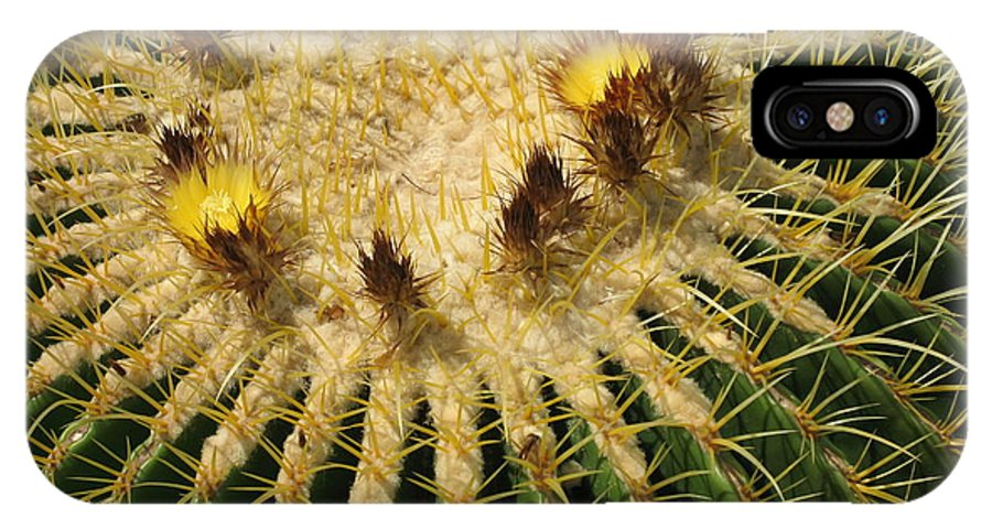 Cactus IPhone X Case featuring the photograph Crown Of Thorns by Christiane Schulze Art And Photography