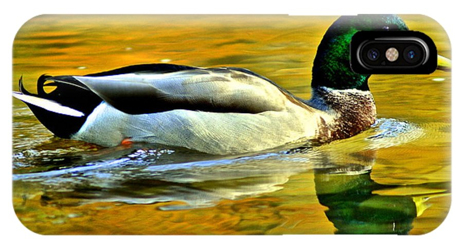 Mallard IPhone X Case featuring the photograph Cruisin by Frozen in Time Fine Art Photography