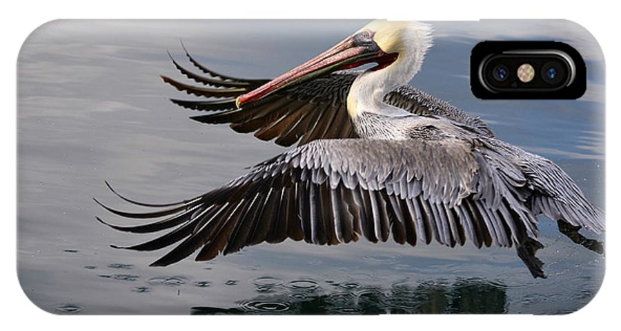 California Brown Pelican IPhone X Case featuring the photograph Cruising At Water Level 2 by Fraida Gutovich