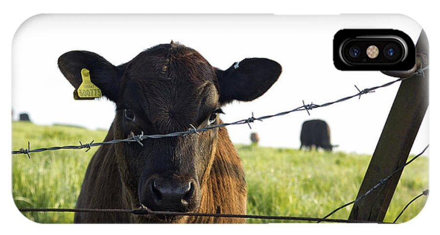 Young IPhone X Case featuring the photograph Curious Calf Looking Through Barbed Wire Fence by Dawn Gilfillan