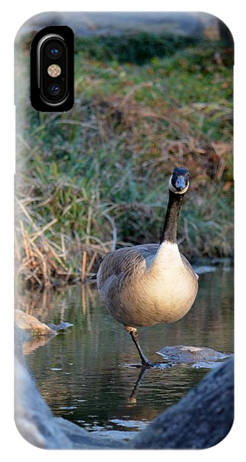 Curious Canadian Goose IPhone X Case featuring the photograph Curious Canadian Goose by Maria Urso