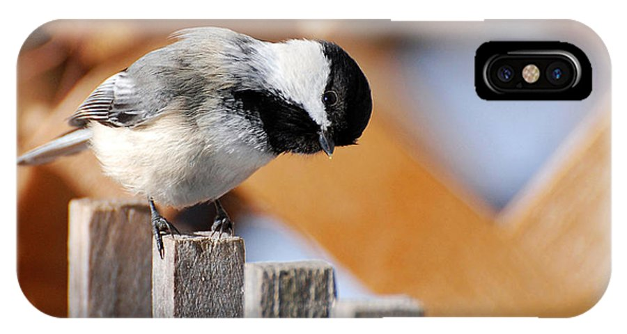 Bird IPhone X Case featuring the photograph Curious Chickadee by Christina Rollo