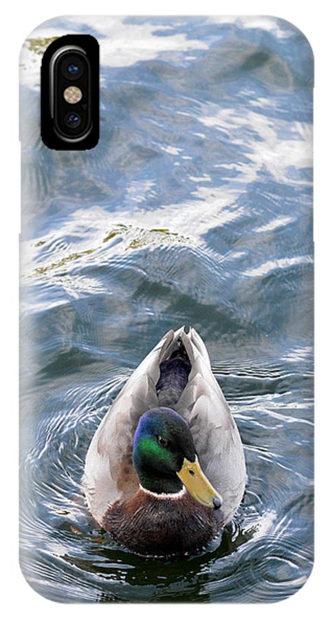 Duck IPhone X Case featuring the photograph Curious Duck by Michael McGowan