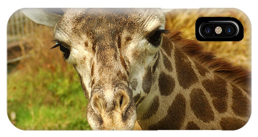 Hungry IPhone X Case featuring the photograph Curious Giraffe by Micah May