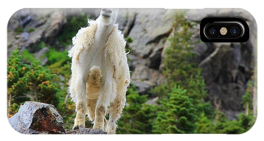 Colorado IPhone X Case featuring the photograph Curious Goat by Danielle Marie