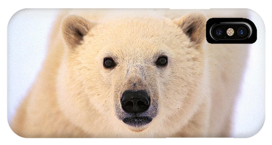 Arctic IPhone X / XS Case featuring the photograph Curious Polar Bear by Randy Green