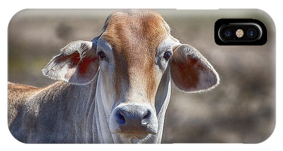 Brahman IPhone X Case featuring the photograph Curious V5 by Douglas Barnard