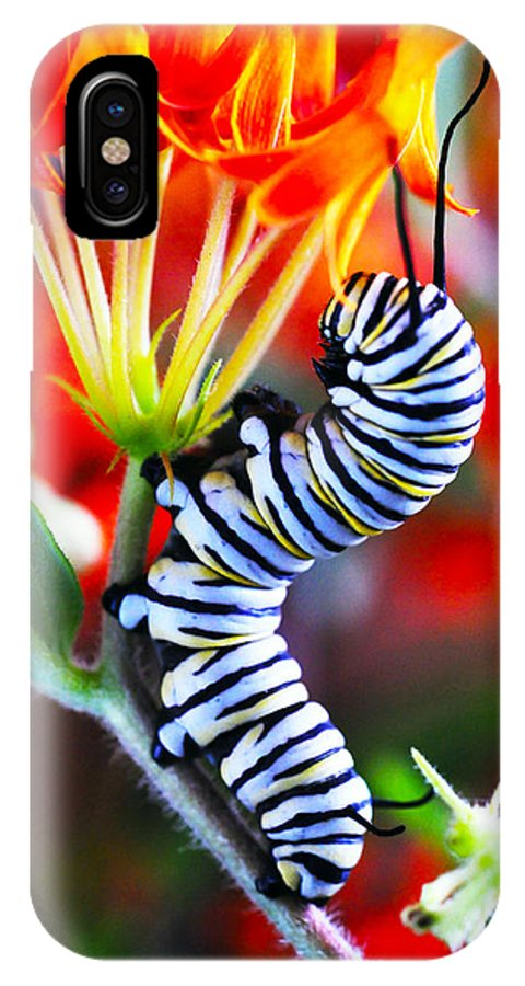 Monarch IPhone X Case featuring the photograph Curly Caterpiller by Betsy Straley