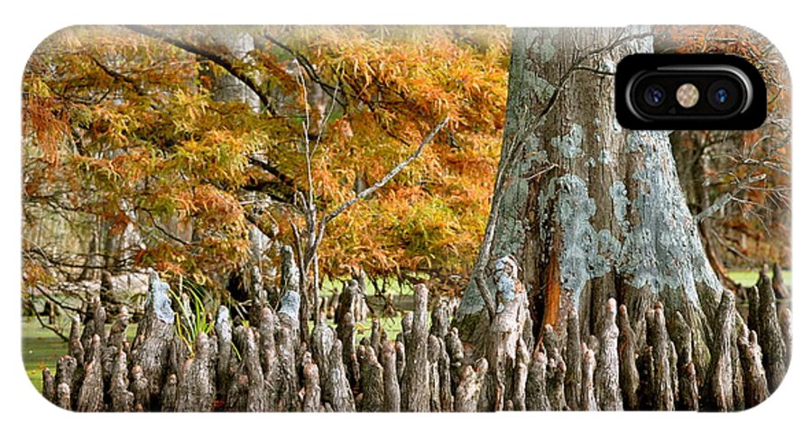 Cypress Knees IPhone X / XS Case featuring the photograph Cypress Knees In Fall by MCM Photography