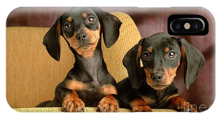 Dachshund Paintings IPhone X Case featuring the mixed media Dachshund Puppies by Marvin Blaine