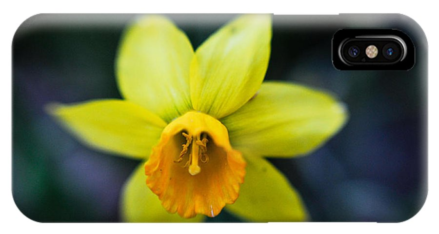 Daffodil IPhone X Case featuring the photograph Daffodil In The Dark by Jeff Picoult