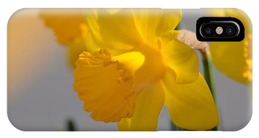 Daffodils In The Setting Sun IPhone X Case featuring the photograph Daffodils In The Setting Sun by Maria Urso