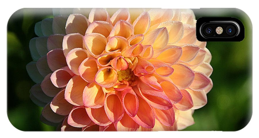 Flower IPhone X Case featuring the photograph Dahlia Hue by Susan Herber