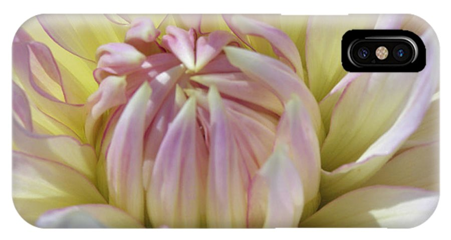 Nature IPhone X Case featuring the photograph Dahlia Kiss by Tikvah's Hope
