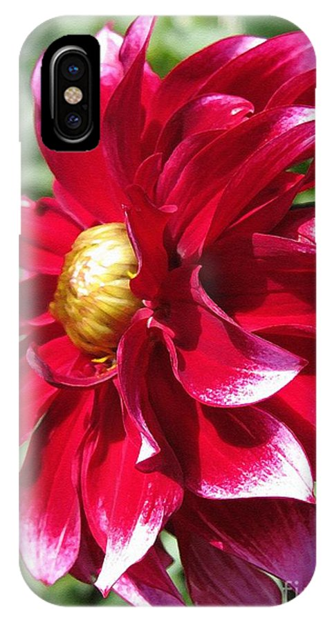 Mccombie IPhone X Case featuring the painting Dahlia Named Darkarin by J McCombie