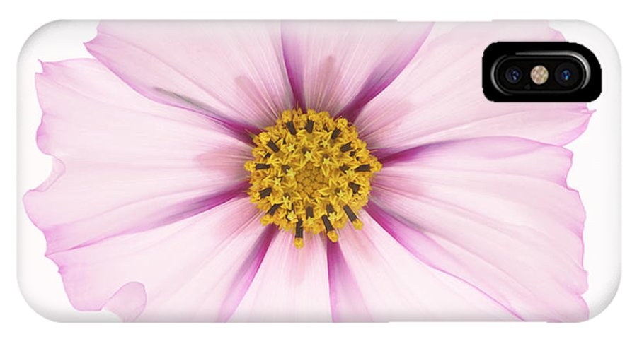 Cosmos IPhone X Case featuring the photograph Dainty Pink Cosmos On White Background. by Rosemary Calvert