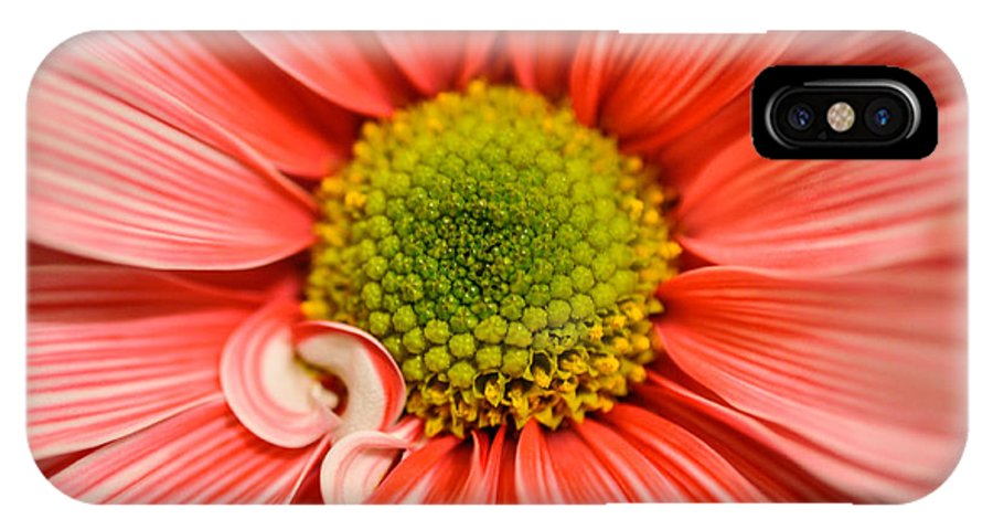 Daisy IPhone X Case featuring the photograph Daisy by Eryn Carter