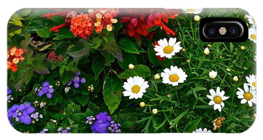 Daisy IPhone X Case featuring the photograph Daisy Field by Frozen in Time Fine Art Photography