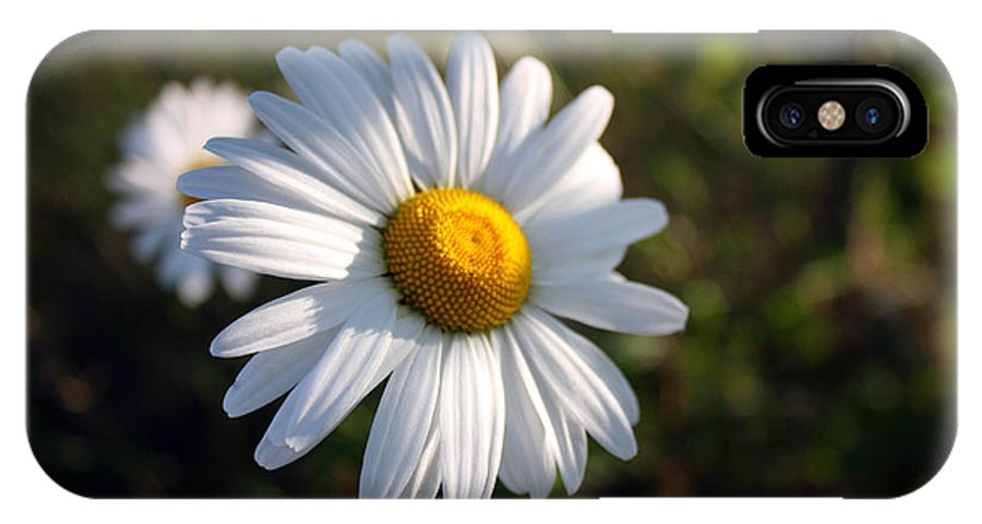 Daisy IPhone X Case featuring the photograph Daisy by Pkm digital Photography