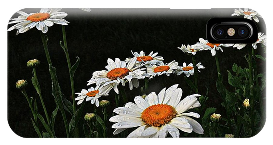 Marcia Lee Jones IPhone X Case featuring the photograph Daisy Power by Marcia Lee Jones