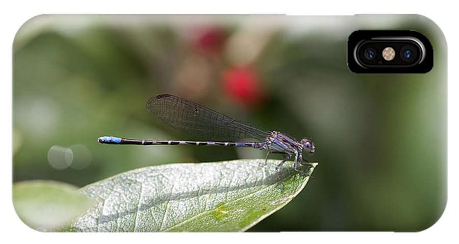 Damsel IPhone X Case featuring the photograph Damsel Fly 2 by Mike Heideman