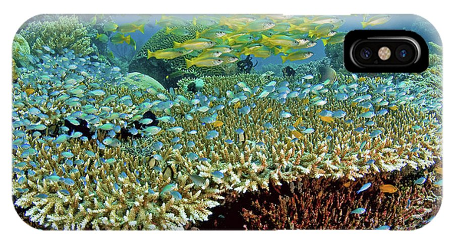 Animal IPhone X Case featuring the photograph Damselfish (pomacentridae by Jaynes Gallery