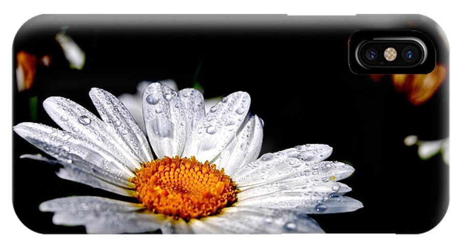 IPhone X Case featuring the photograph Dancing Daisy by Jessica A Lloyd