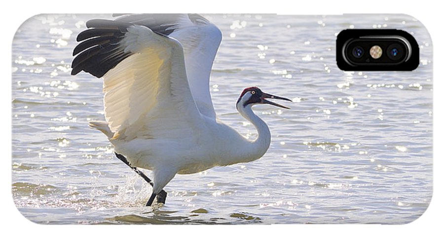 Whooping Crane IPhone X Case featuring the photograph Dancing For My Lady by Tony Beck
