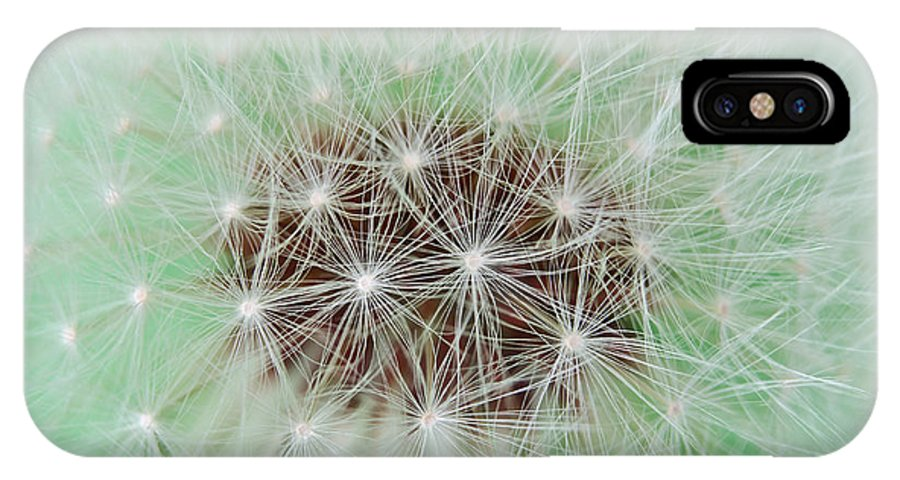 Abstract IPhone X Case featuring the photograph Dandelion Abstract 1 by Daniel Ward