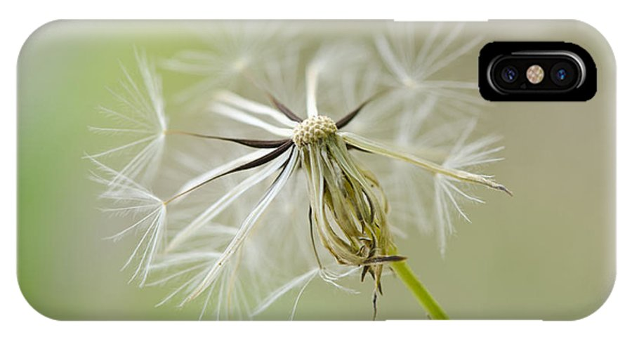 Dandelion IPhone X Case featuring the photograph Dandelion Alone by Julie Wynn