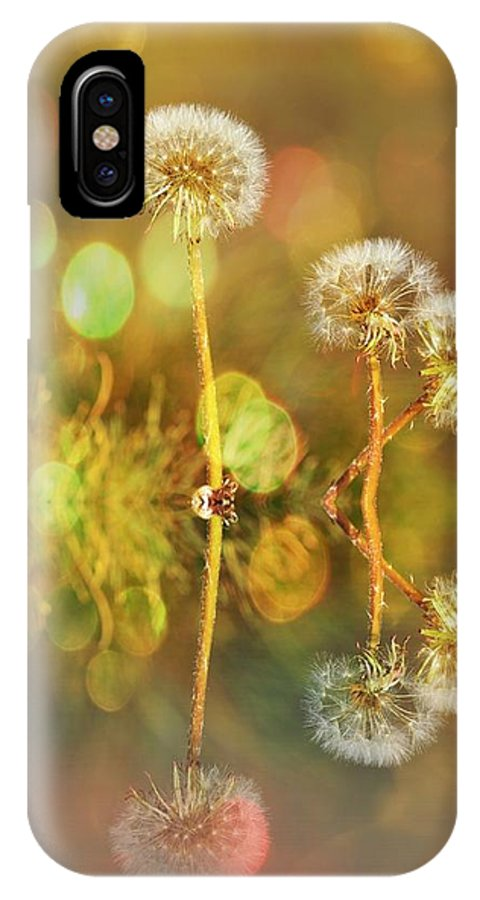 Dandelions IPhone X Case featuring the photograph Dandelion Delight by Fraida Gutovich