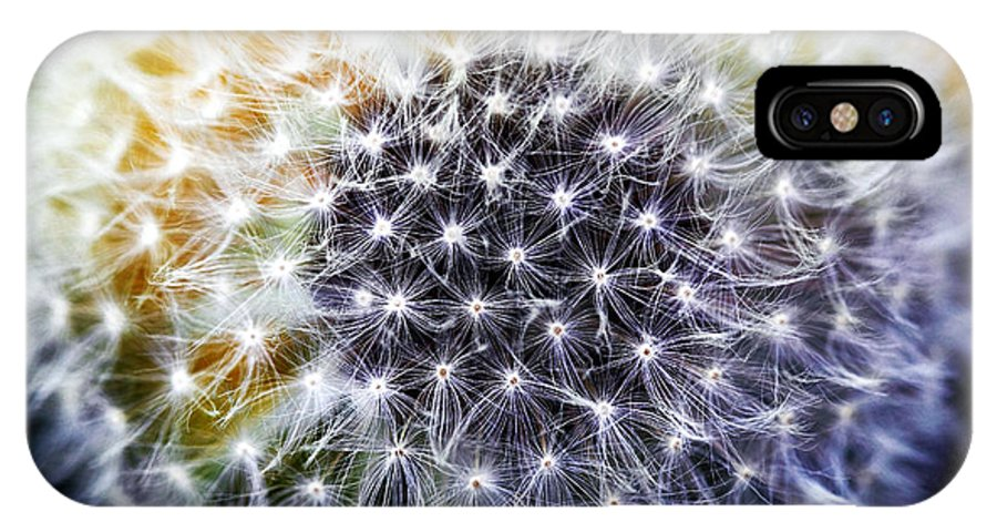 Dandelion IPhone X Case featuring the photograph Dandelion by John Rizzuto