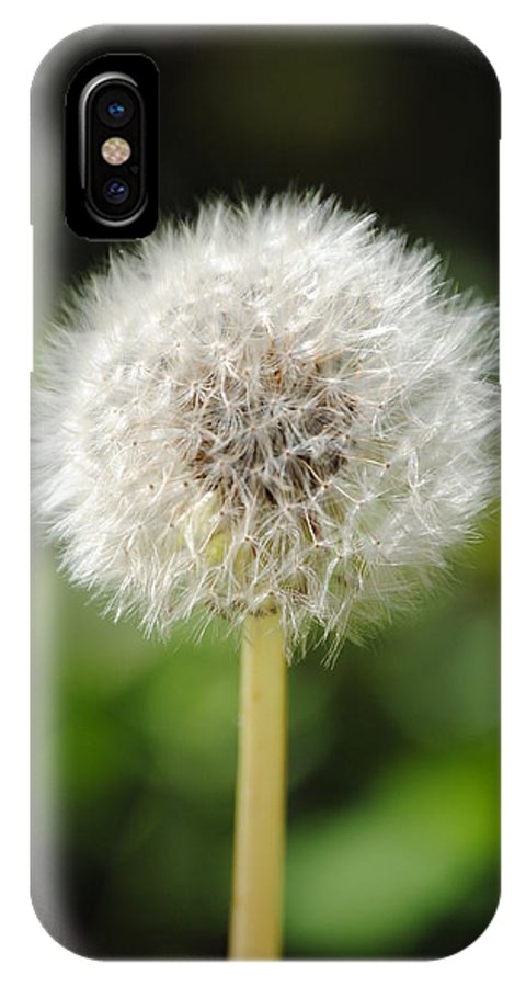 Dandelion IPhone X Case featuring the photograph Dandelion by Mary Maule