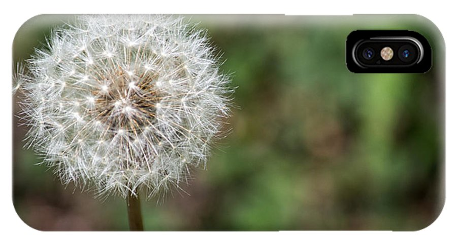 Dandelion IPhone X Case featuring the photograph Dandelion by Terry Thomas