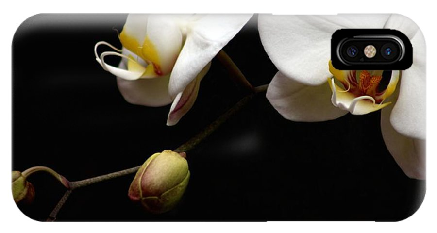 Phalaenopsis Orchid IPhone X Case featuring the photograph Dark Orchid by Carol Montoya
