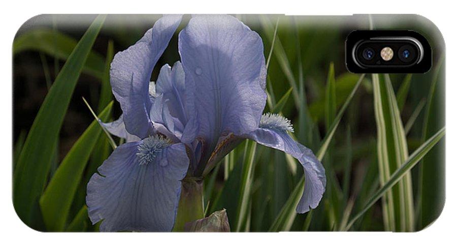 Dashing Pale Violet Iris IPhone X / XS Case featuring the photograph Dashing Pale Violet Iris by Georgia Mizuleva