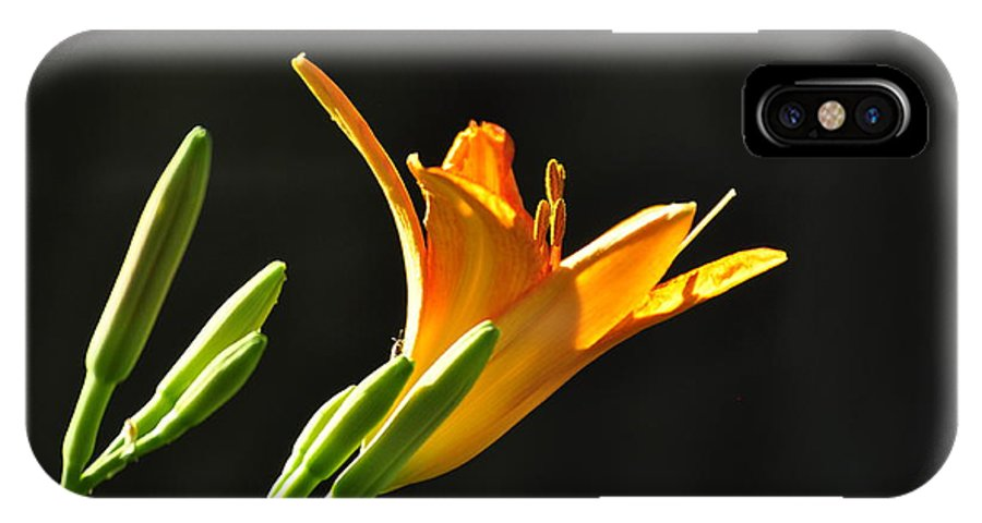 Flowers IPhone X Case featuring the photograph Day Lily 1 by Michael Dyer