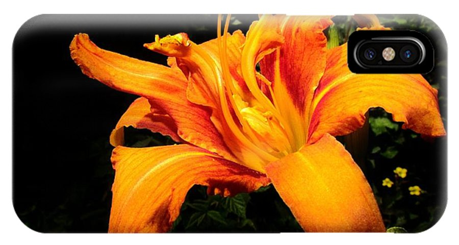 Daylily IPhone X Case featuring the photograph Daylily by Eric Noa