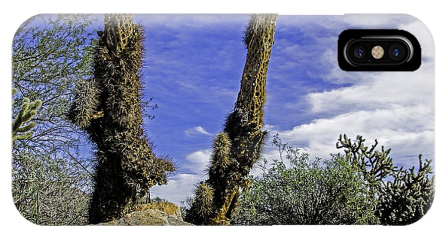 Arizona IPhone X Case featuring the photograph Death Of A Cactus by George Davidson