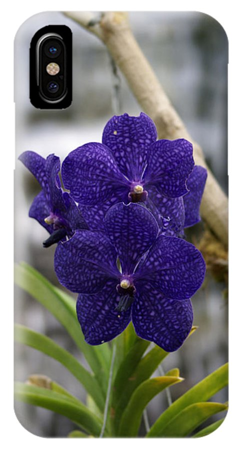 Orchard IPhone X Case featuring the photograph Deep Purple Orchard by Lauren Simon