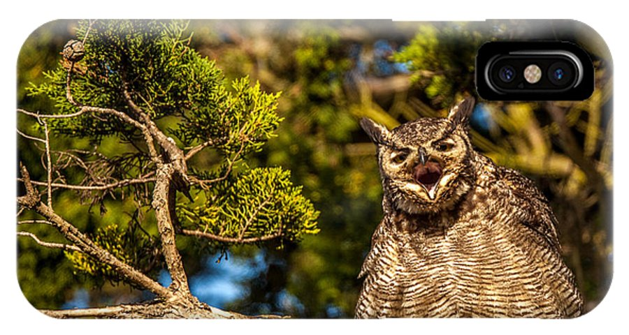Owl IPhone X Case featuring the photograph Deep Reyes by Kevin Dietrich