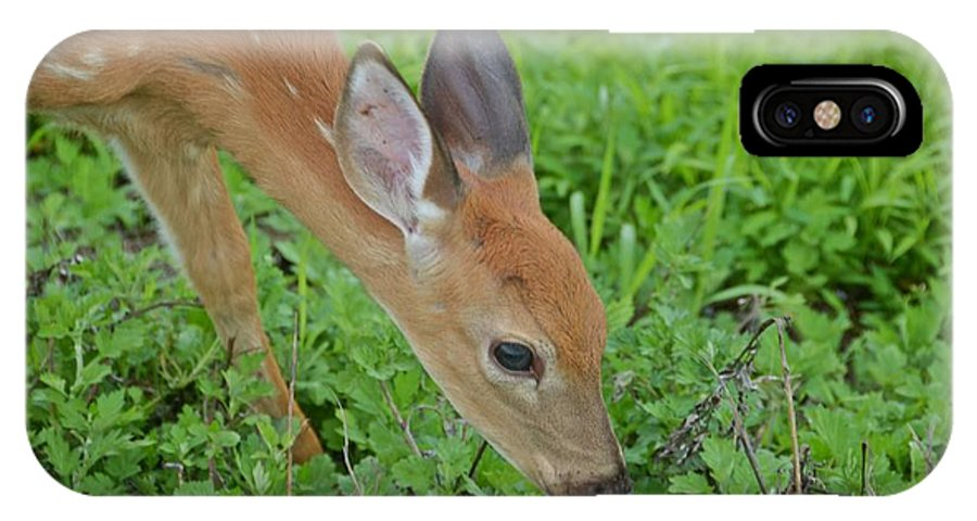 Deer IPhone X Case featuring the photograph Deer 12 by Cassie Marie Photography