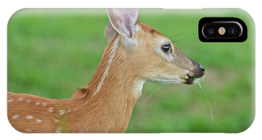 Deer IPhone X Case featuring the photograph Deer 14 by Cassie Marie Photography