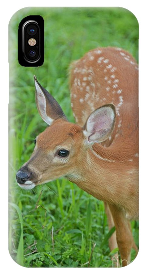 Deer IPhone X Case featuring the photograph Deer 18 by Cassie Marie Photography