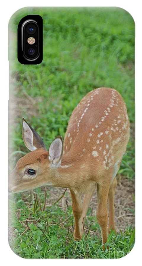 Deer IPhone X Case featuring the photograph Deer 7 by Cassie Marie Photography