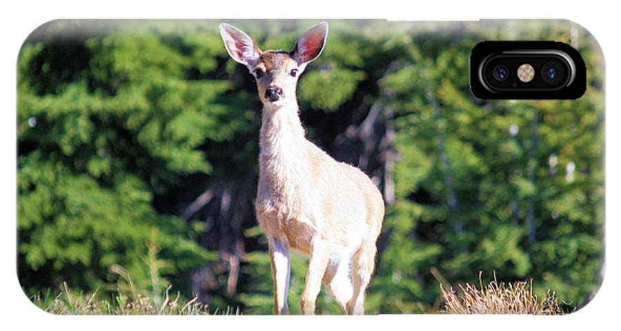 Deer IPhone X Case featuring the photograph Deer Approaching by Steven Baier