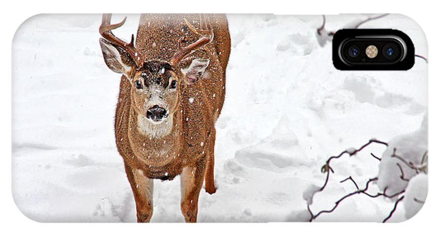 Deer IPhone X Case featuring the photograph Deer Buck In Snow by Peggy Collins