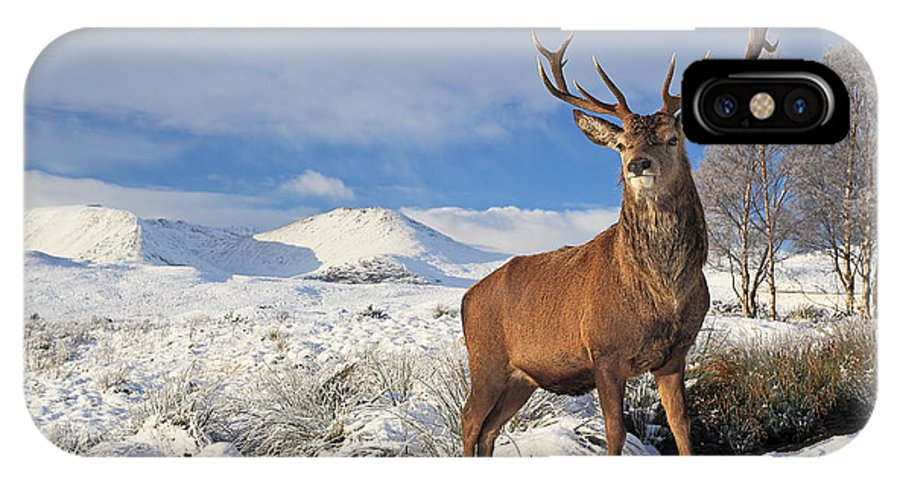 Deer Stag IPhone X / XS Case featuring the photograph Deer In The Snow by Grant Glendinning