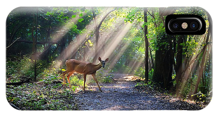 Deer IPhone X Case featuring the photograph Deer In The Sun by Malcolm MacGregor